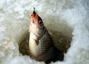Ловля рыбы с мормышкой