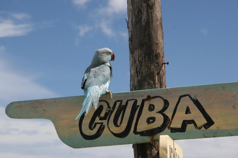 Остров свободы - Куба