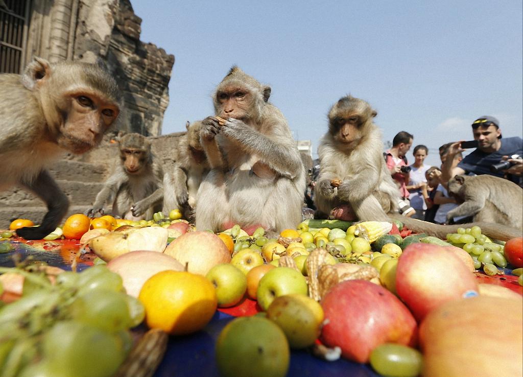 Ежегодный фестиваль обезьян в Таиланде