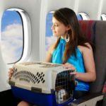 Delta Air запретит перевозку животных в салоне