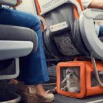 В России хотят изменить правила авиаперевозки животных