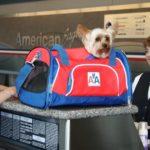 В США хотят запретить брать в салон самолёта животных