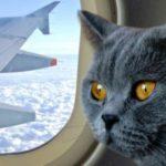 """Авиакомпания «МАУ» разрешила брать в салон """"толстых котов"""""""